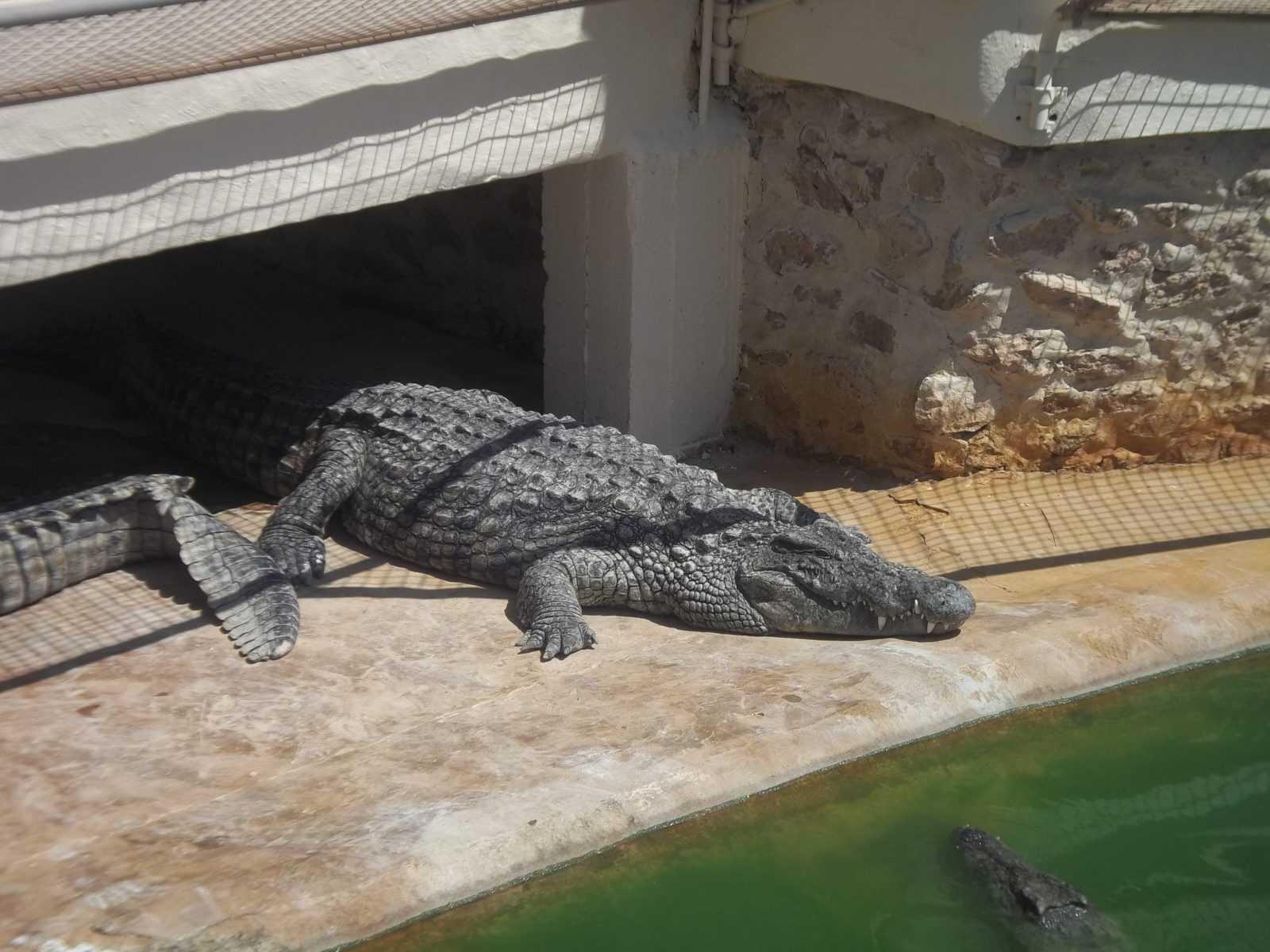 крокодиловая ферма джерба официальный сайт